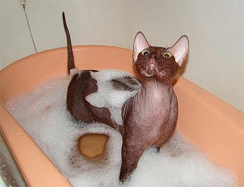 шампунь от паразитов для кошек