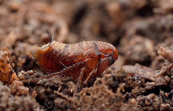 паразиты кусающие человека