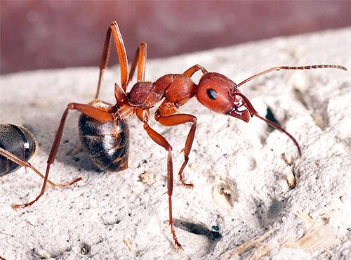 В действительности ДЭТА воздействует на обонятельные рецепторы насекомых