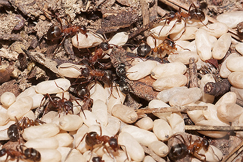 доклад про насекомых 1 класс