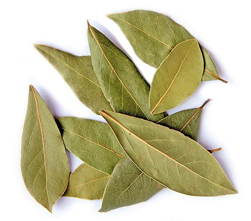 Запах лаврового листа отпугивает муравьев