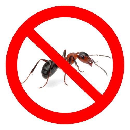 Сегодня существует много средств для борьбы с муравьями