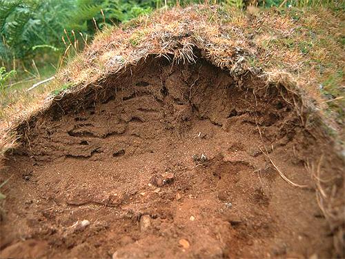 У многих видов муравьев жизнь в муравейнике зимой не замирает