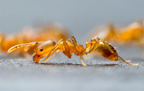 Существуют различные методы борьбы с муравьями в квартире