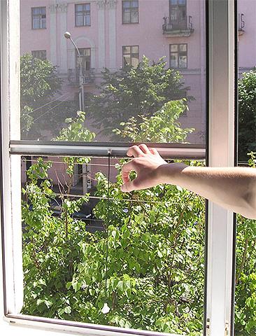 Москитная сетка на окне поможет бороться с попаданием древесных клопов в квартиру