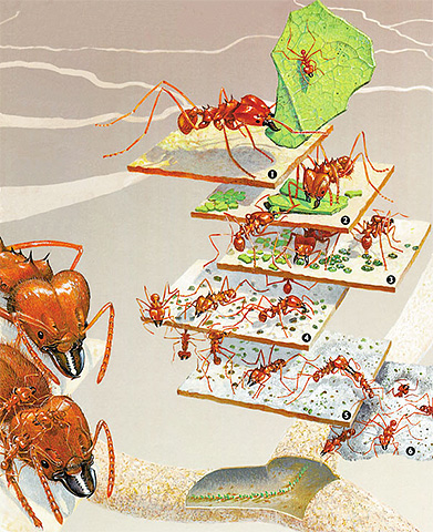 В разрезе муравейник похож на яйцо со своим центром и множеством слоев