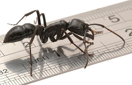 Посчитаем, сколько всего ног у муравья