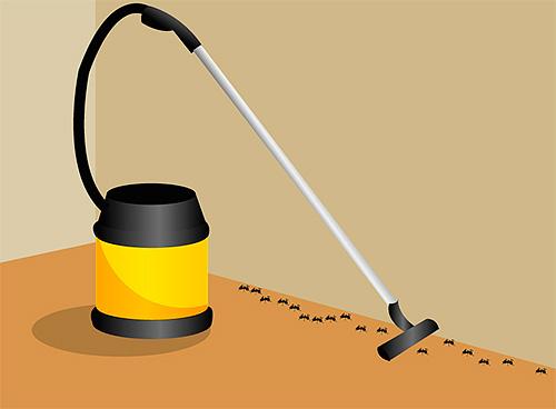 Разрушить найденный в квартире муравейник можно пылесосом