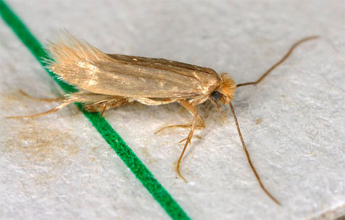 Аэрозоли очень быстро проникают в насекомое и вызывают его отравление, поэтому эффект проявляется почти мгновенно