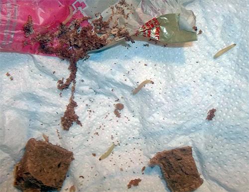 Излюбленное место обитания личинок моли - сухие продукты питания