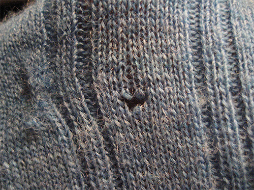 Эту дыру в свитере оставили личинки платяной моли