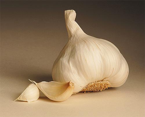 Дольки чеснока иногда используют для борьбы с молью на кухне