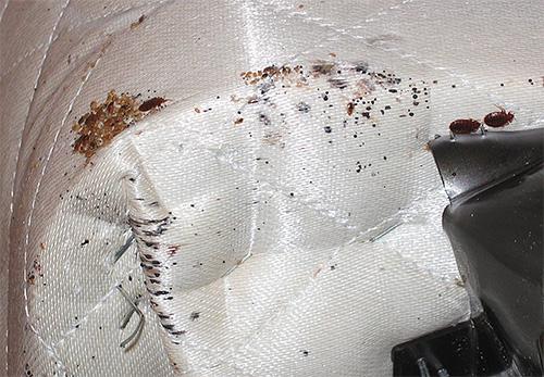Для уничтожения клопов обязательно следует обработать раствором Цифокса каркасы дивана или кровати