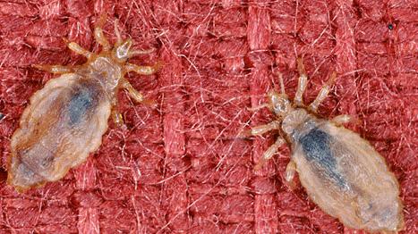 сколько паразитов живет в человеке