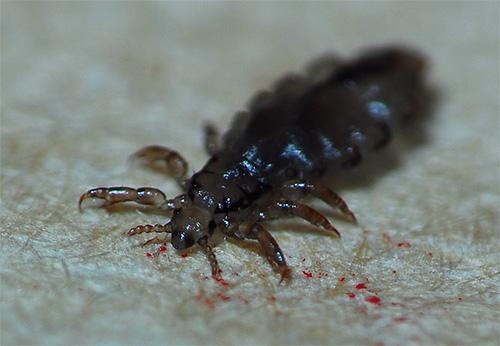чего боятся паразиты в организме человека видео