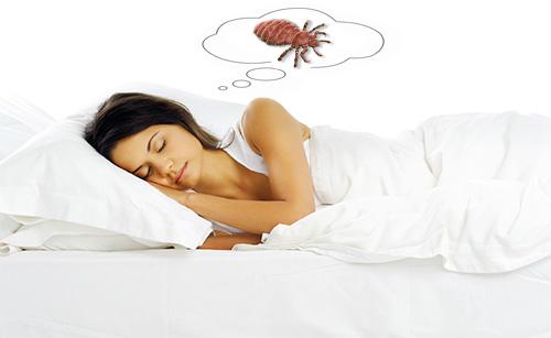 Посмотрим, что говорят различные сонники о появлении вшей во сне