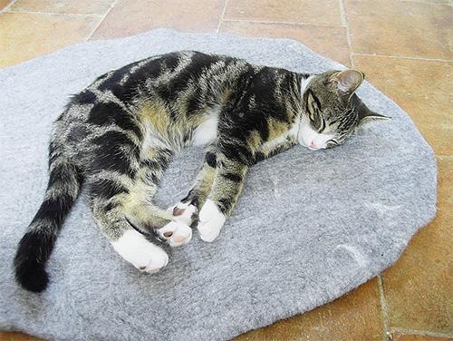 В кошачьих подстилках зачастую присутствует множество блох и их личинок