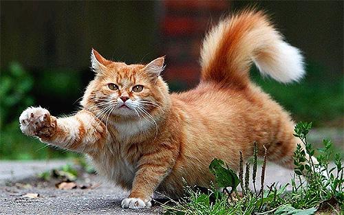 Поговорим о том, как эффективно и безопасно вывести блох у котов