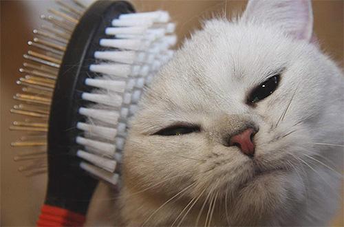 Перед тем как обработать кота от блох, стоит его хорошенько вычесать