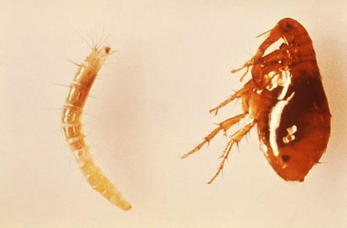 как бороться с паразитами в организме
