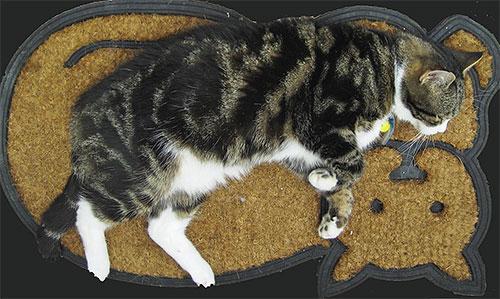Личинки блох и сами блохи чаще всего обитают на подстилках домашнего животного или под ними