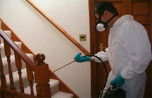 В услугу Люкс входит полная подготовка помещения к обработке от клопов и ее уборка после.