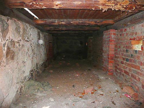 Если в подвале дома живут крысы или мыши, то почти наверняка здесь же будут жить и блохи