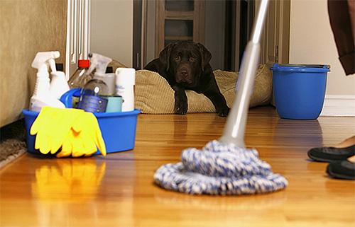 После обработки дома от блох следует затем провести в нем тщательную влажную уборку