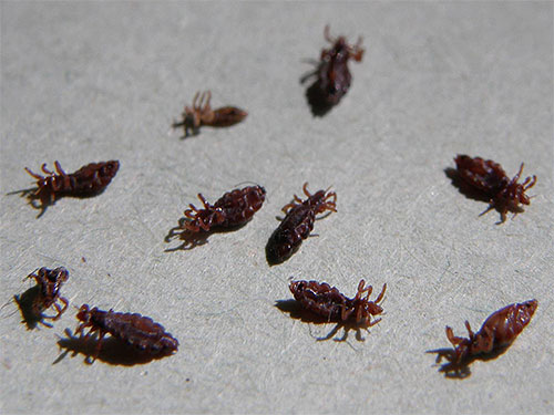 Новые инсектициды вызывают быстрый паралич и гибель насекомых