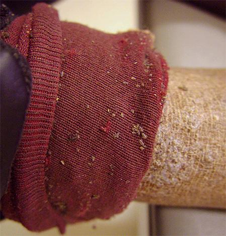 Для уничтожения платяных вшей дома достаточно как следует обработать тело и одежду противопаразитарными препаратами