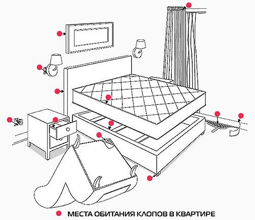 На картинке показны места в квартире, где в первую очередь стоит искать клопов