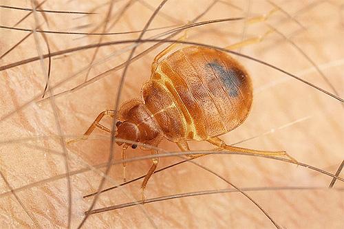 ультразвуковые отпугиватели насекомых эффективны ли они