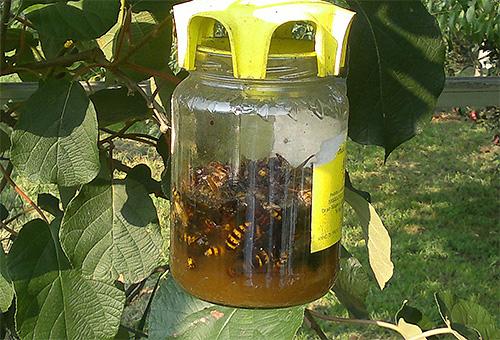 А это самодельная ловушка для ос и шершней, подвешенная на дереве