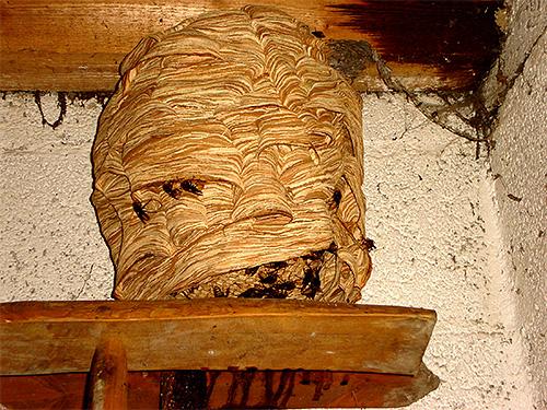 Особенно тяжелыми могут быть последствия при массовых укусах пчел или шершней, когда потревожили их гнездо.