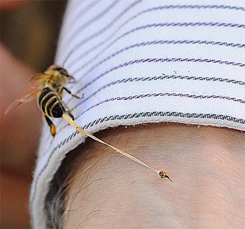 Укусы пчел, ос и шершней могут вызывать быструю и тяжелую аллергическую реакцию.