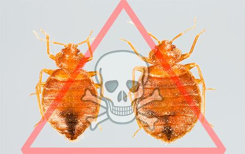 уничтожить паразитов в человеке