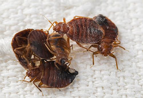 отзывы об отпугивателях насекомых и тараканов