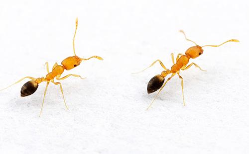 В колонии домашних муравьев у каждой особи есть свои обязанности