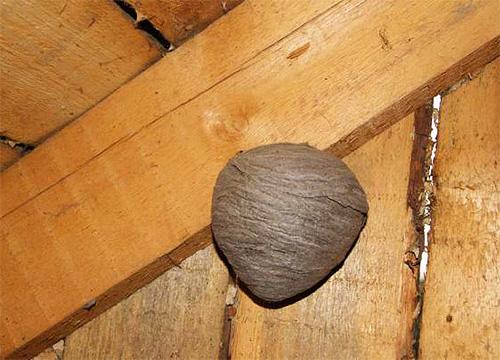 Особенно часто осы строят свои гнезда на чердаках деревянных домов.