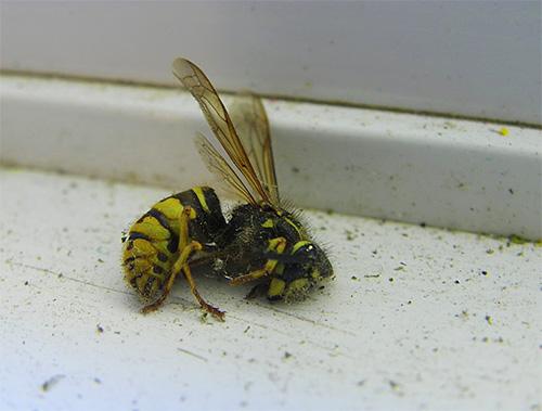 Существует довольно много инсектицидных препаратов, пригодных для уничтожения ос.