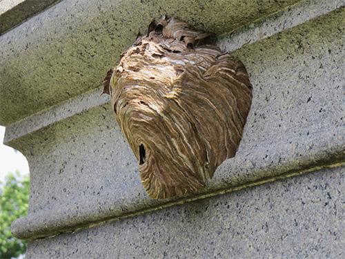 Пример осиного гнезда под карнизом балкона.