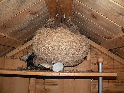 Внешне гнездо шершней может напоминать огромный шар