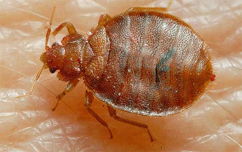 В договоре на оказание услуг компанией Клоп Контроль должны указываться площадь обрабатываемого помещения и применяемые от насекомых средства