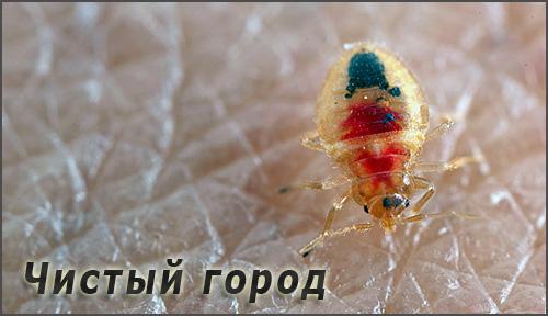 Существует несколько компаний под названием Чистый город, оказывающих услуги по уничтожению клопов и дургих насекомых - давайте познакомимся с ними подробнее...