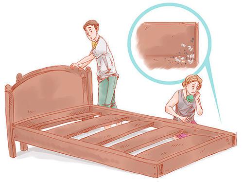После обработки квартиры зачастую яйца клопов остаются живыми, из них выводятся личинки примерно через 1-2 недели.