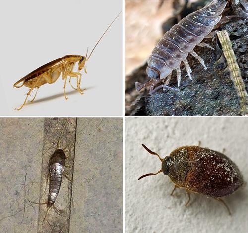 Узнаем подробнее о различных видах насекомых, которые встречаются в квартирах, а также посмотрим, как они выглядят на фотографиях...