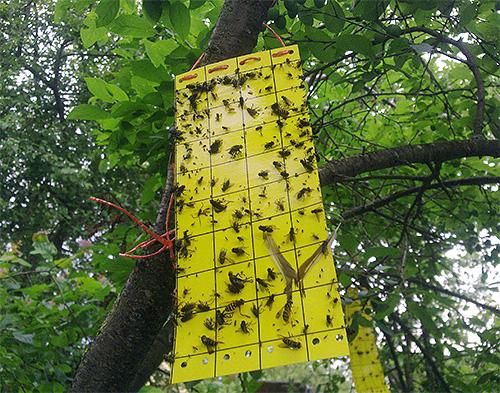 А это уже пример липкой ловушки для насекомых