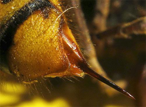 Избавляясь от ос, не следует забывать, что каждое насекомое способно ужалить вас несколько раз.