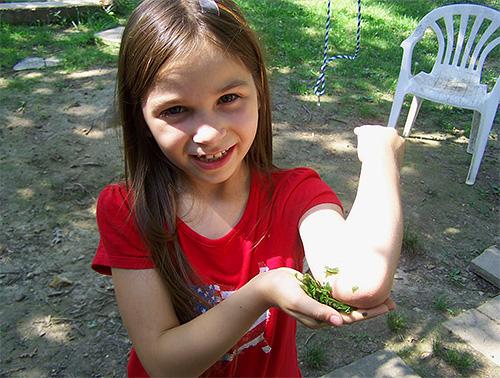 В большинстве случаев укус осы не имеет серьезных последствий для ребенка, и неприятные ощущения довольно быстро проходят.