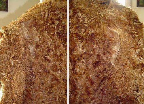 Моль, обитающая в вашем доме, может наносить значительный ущерб меховым изделиям.